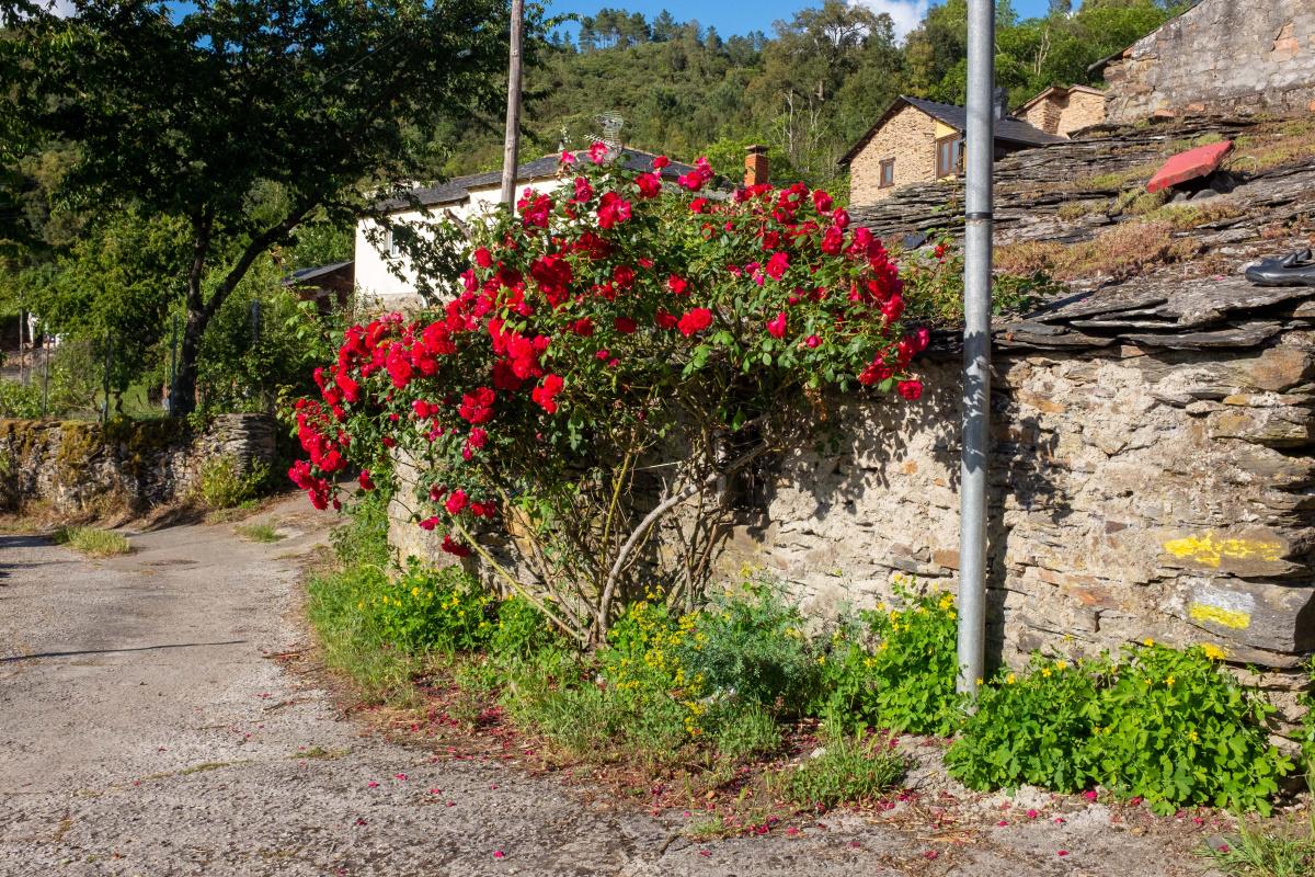 Photo of Novais on the Camino de Santiago